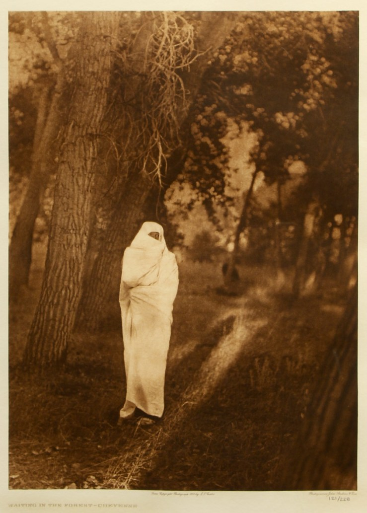 Edward S Curtis- Waiting the Forest-Cheyenne Photogravure- Matthews Gallery Blog